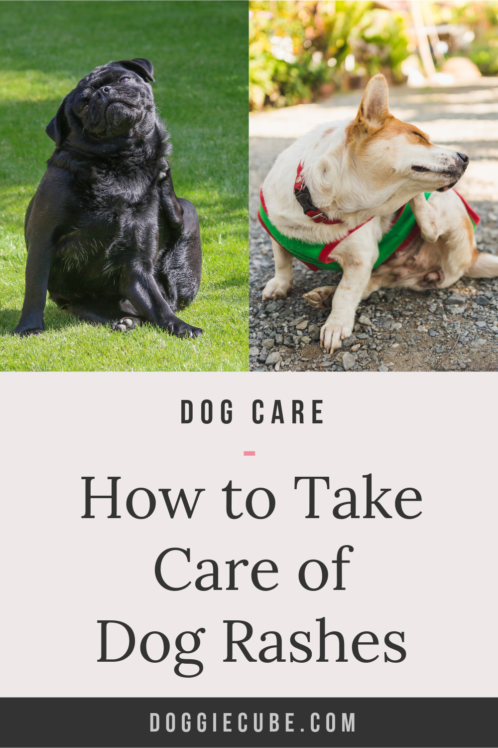 How To Take Care Of Dog Rashes Dog rash, Dogs, Dog care tips