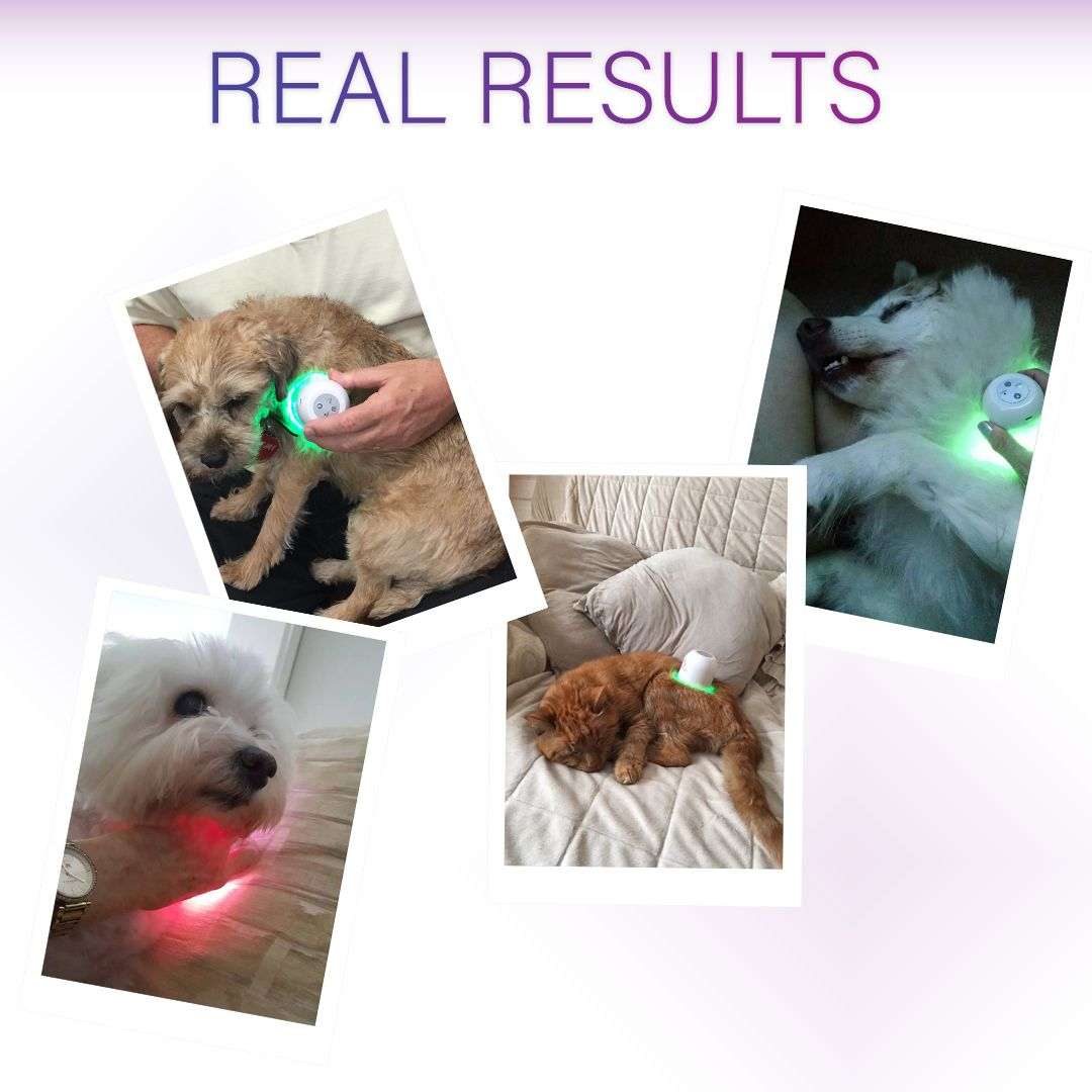 Pin By Lumasoothe On Lumasoothe In Use Pets Drug Free Light Therapy