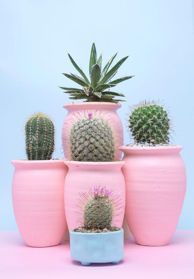 Cactus Room Decoration Cactus Nursery And Bedroom Decor