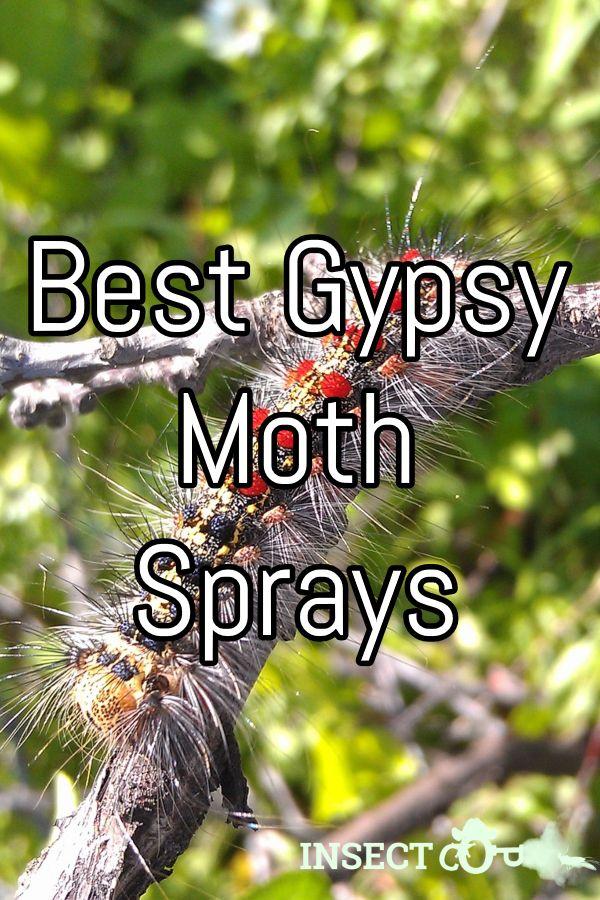 Pin on Moth control tips & tricks