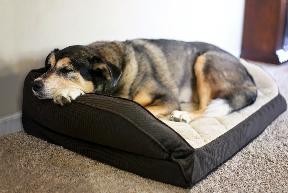 Best Dog Beds For Arthritic Dogs Very Cozy Home For Older Dogs Cool Dog Beds Orthopedic Dog Bed Best Orthopedic Dog Bed