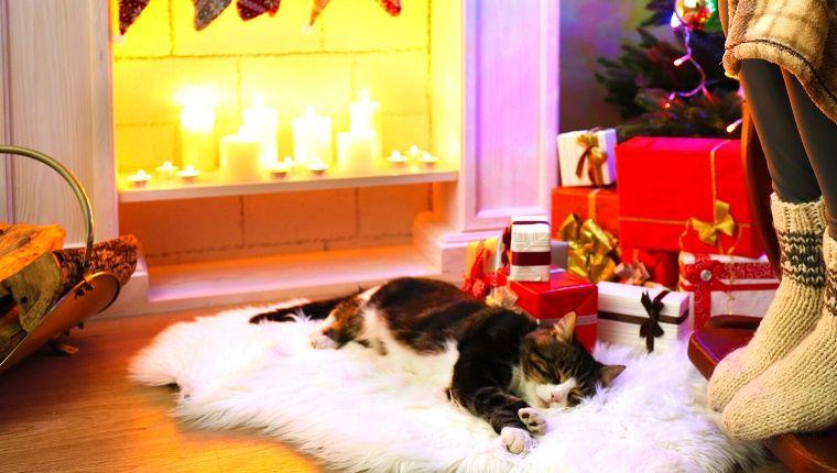 Imagini pentru xmas fireplace with cats