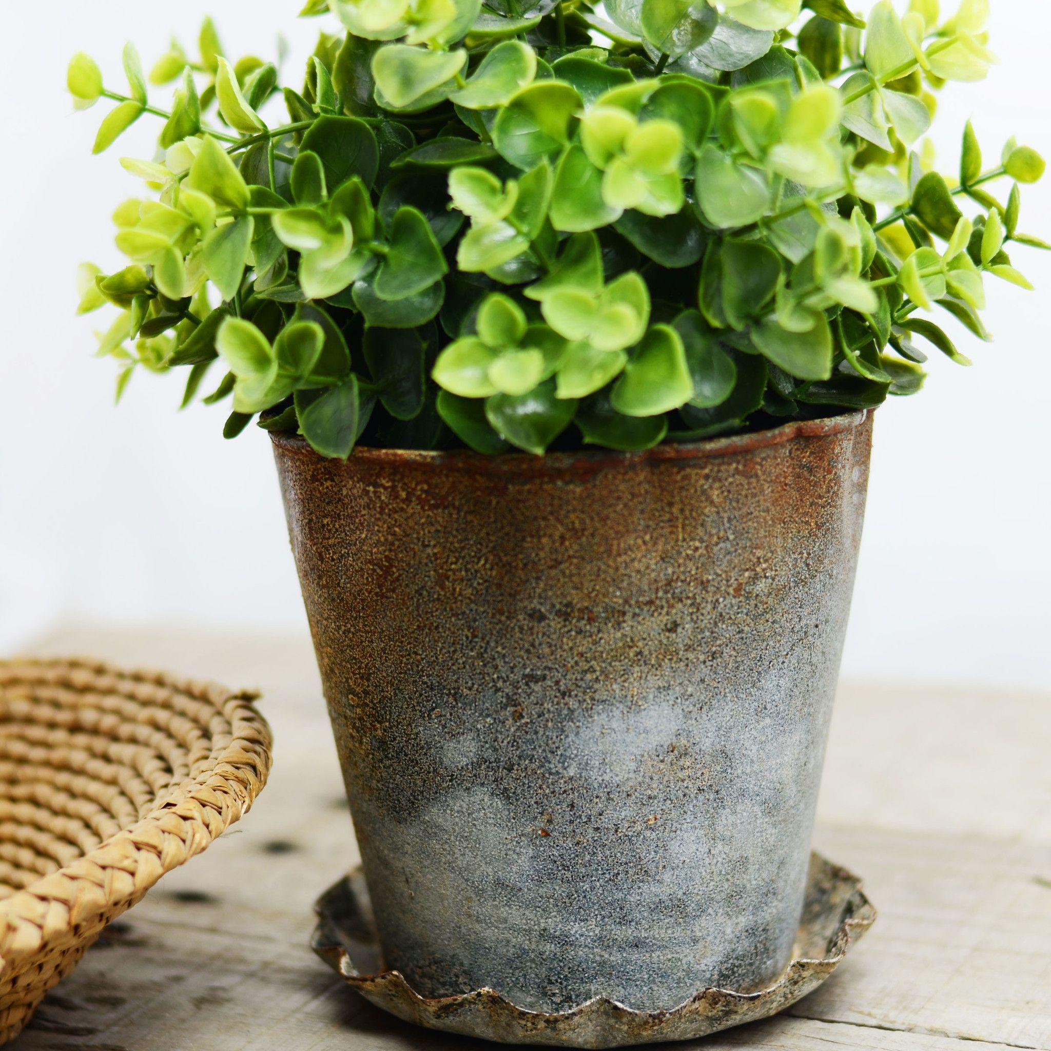 Farmhouse Zinc Flower Pot with Scalloped Dish Flower