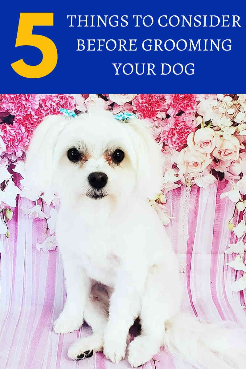 Do It Yourself Dog Grooming Tips For Everyone Pet Grooming
