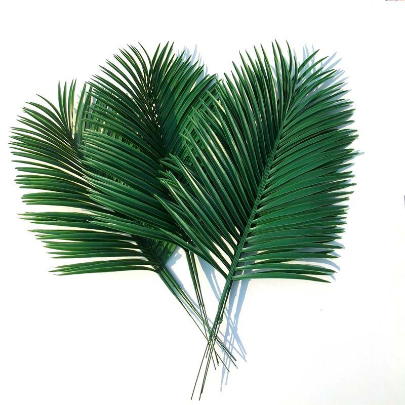 Fotos de palmas secas 65