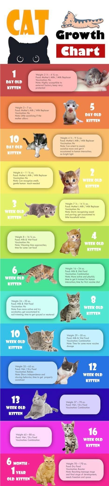 Cat Has Kittens Cats And Kittens Pictures Cat Infographic Kitten Kitten Care