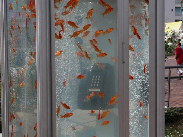 phone booth aquarium. via enpundit.