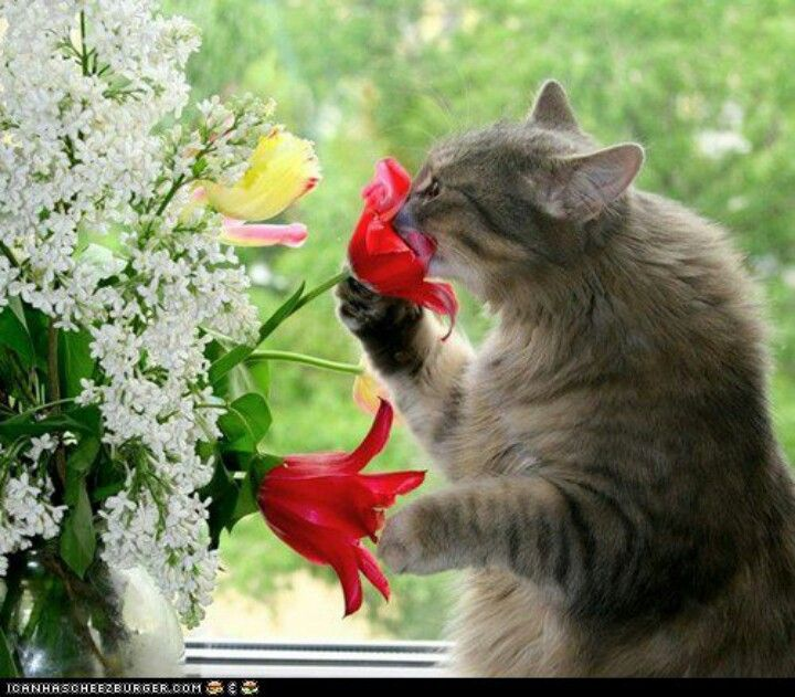 Stop n smell the flowers