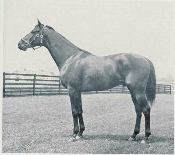 Twenty Grand (1928-1948) was sired by St. Germans out of Bonus; Grandsire: Swynford; Damsire: All Gold. His racing record was an excellent 14 wins out of 25 starts (14-4-3) and he was named both the American Champion 3-Year-Old Colt and Horse of the Year in 1931. Twenty Grand was inducted into the Hall of Fame in 1957.