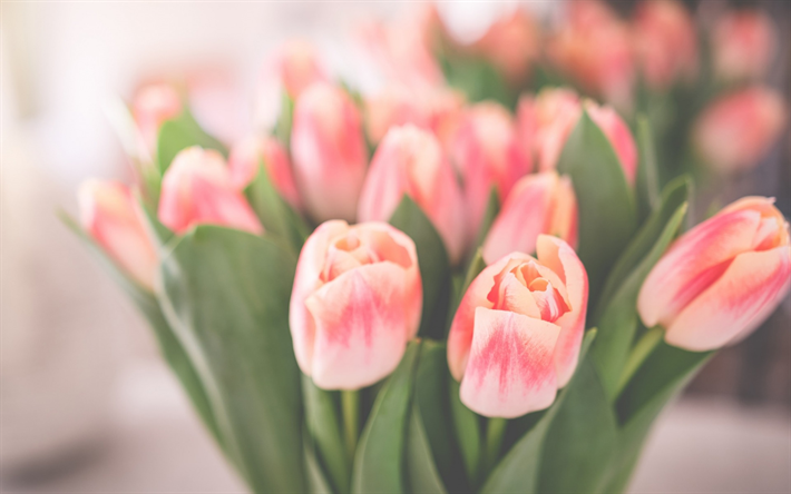 herunterladen hintergrundbild rosa tulpen fr hling strau sch ne blumen tulpen blumen. Black Bedroom Furniture Sets. Home Design Ideas