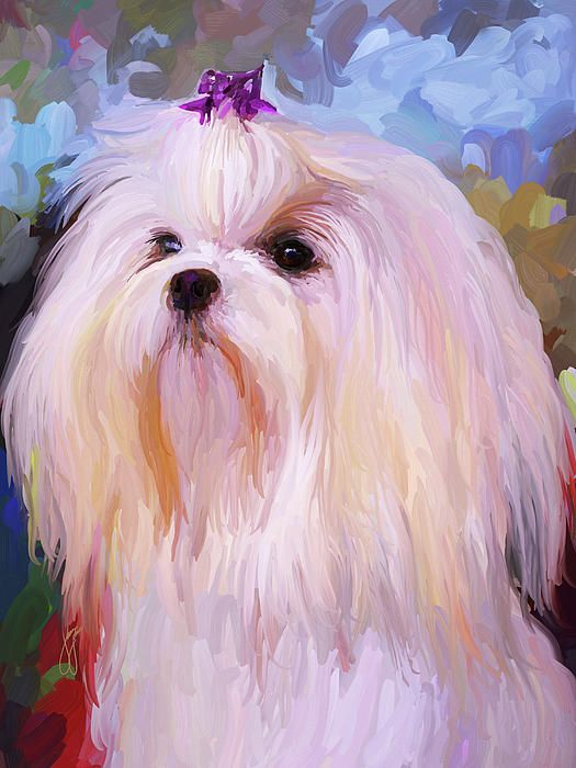 Maltese Portrait By Jai Johnson Dog Paintings Maltese Dogs Dog Art