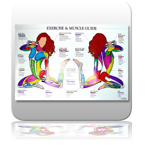 Muscle Chart For Exercise  Exercise Muscle Chart  Group Picture