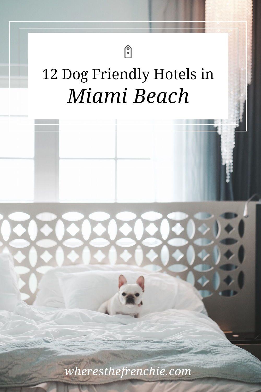12 Miami Beach Dog Friendly Hotels Dog beach, Dog