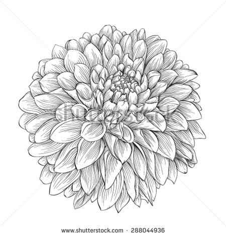 Vector Illustration - Beautiful monochrome sketch, black and white dahlia  flower isolated. Stock Clip Art gg102753405 - GoGraph
