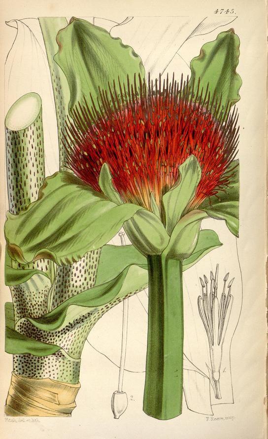 v.79 [ser.3:v.9] (1853) - Curtis's botanical magazine. - Biodiversity Heritage Library