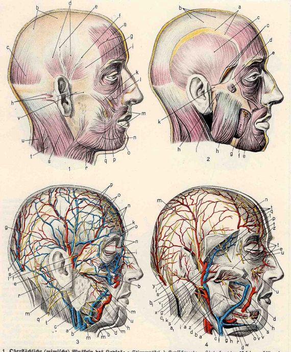 C 1920 Human Anatomy Print Interactive Medical Lithograph