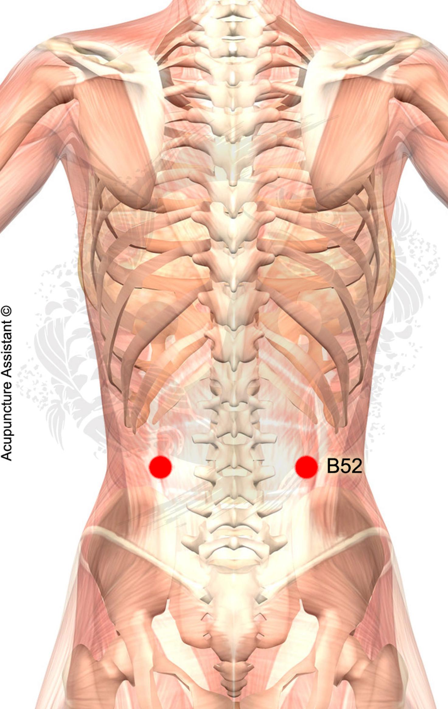 B52-Zhishi-ponto-de-acupuntura | Shiatsu | Pinterest | Acupuntura ...