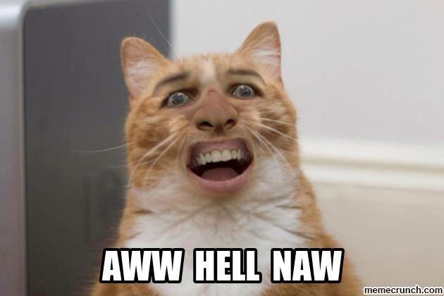 Awww Hell Naw Nicholas Cage Cat Rules Lol Good Humored - 35 cats pulling ridiculous faces imaginable