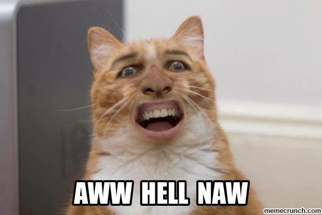 Awww Hell Naw Nicholas Cage Cat Rules!! Lol
