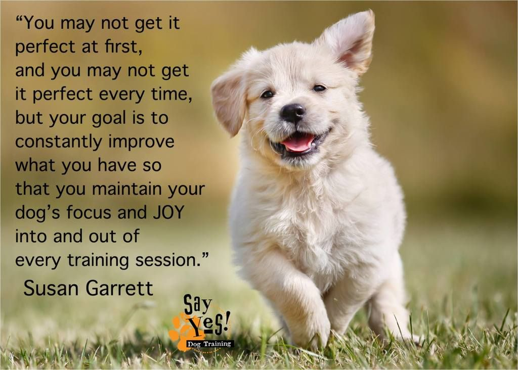 Top Say Yes Training Reminders Dog Training Dogs Puppies