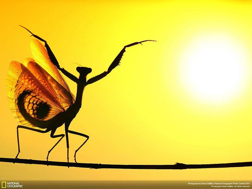 Obrazom: 21 najlepších fotografií prírody podľa National Geographic   Dobré noviny