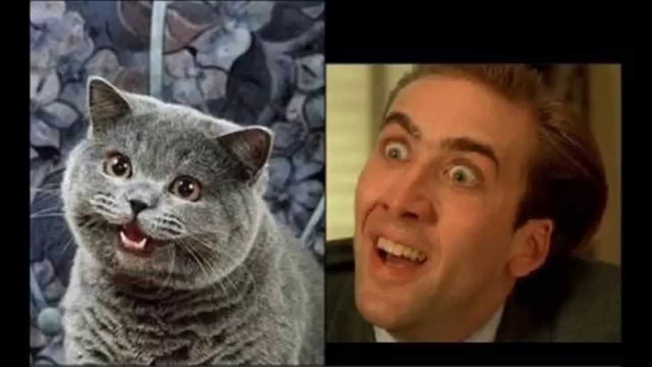Nicholas Cage | Cat face, Nicolas cage, American actors