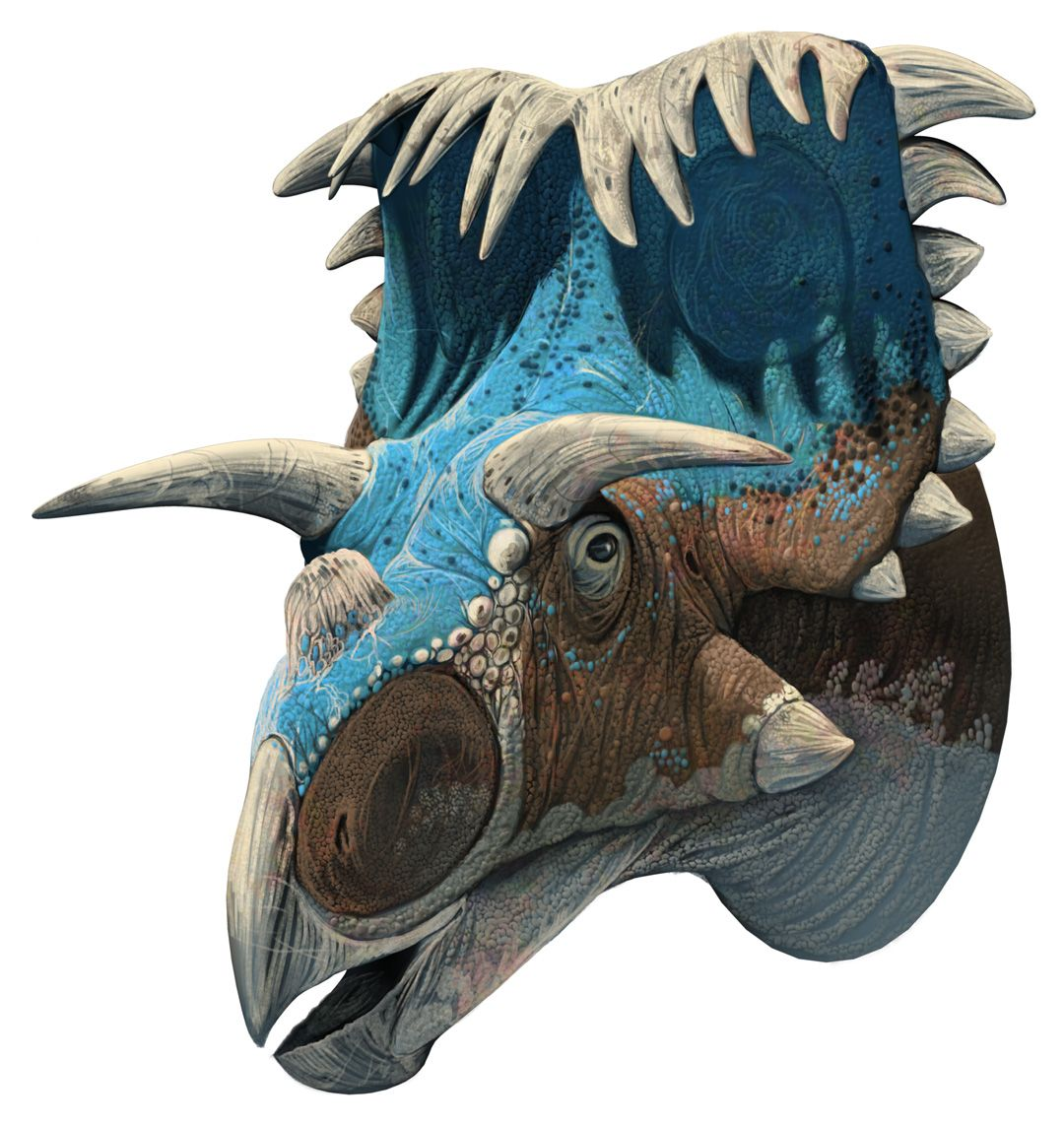 Kosmoceratops, Late Cretaceous (76.4-75.9 Ma), Discovered ...