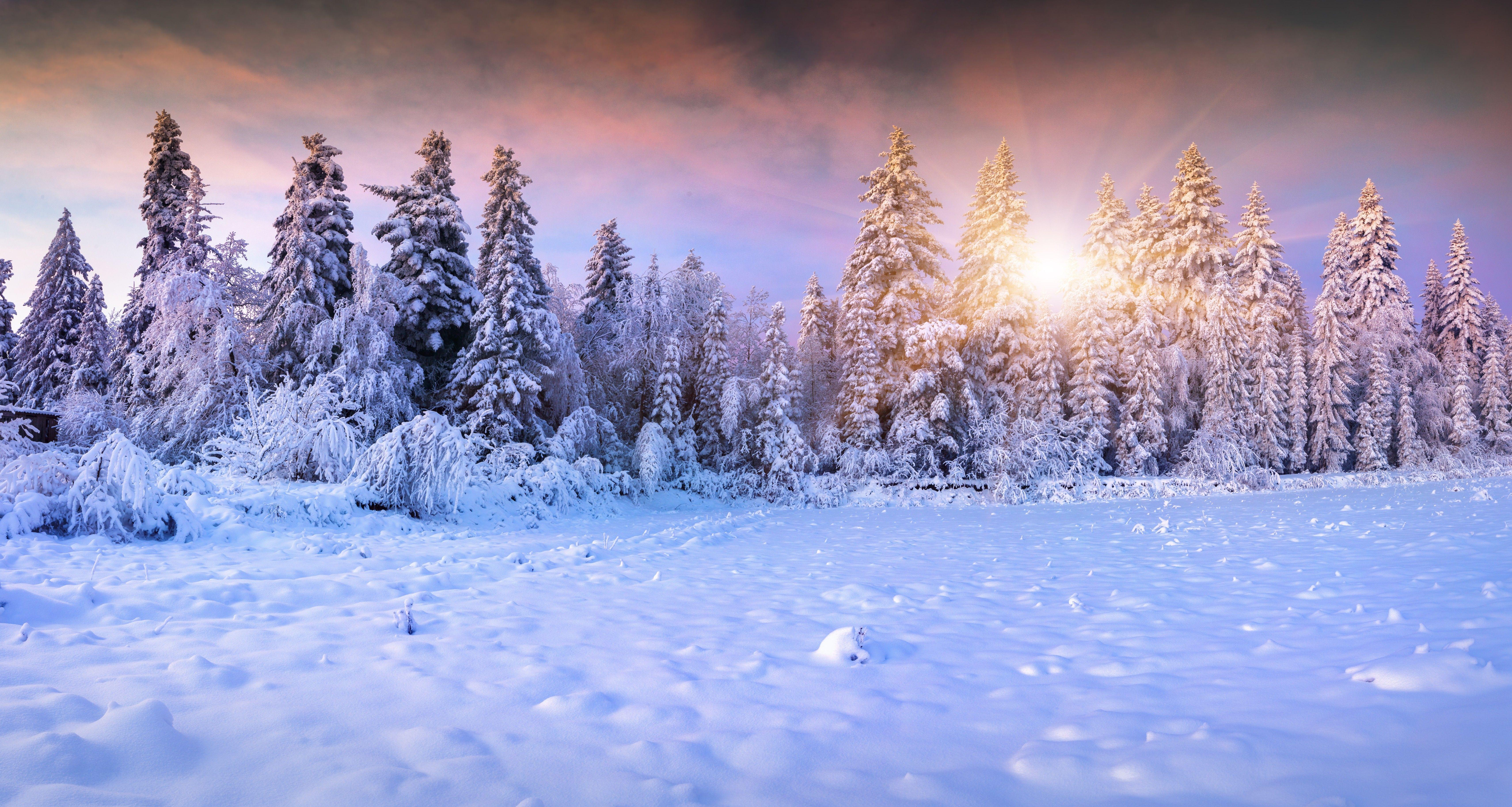 Winter Winter Forest Snow Fir Tree Sun Gallery For Hd 16 9 High Winter Wallpaper Winter Snow Wallpaper Winter Backdrops
