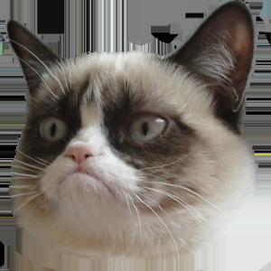 Sad Cat Meme Transparent - Best Cat Wallpaper