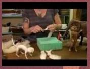 How To Needle Felt  Begin Scuplting Sarafina Fiber Art Episode 3  YouTube