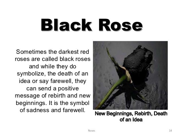 Black Rose Meaning Google Search My Favorites Pinterest