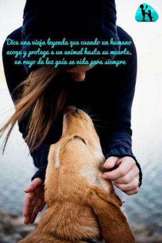 Citas Sobre Perros Página 2 Mi Perro Es único Mascotas Perros Frases Perros