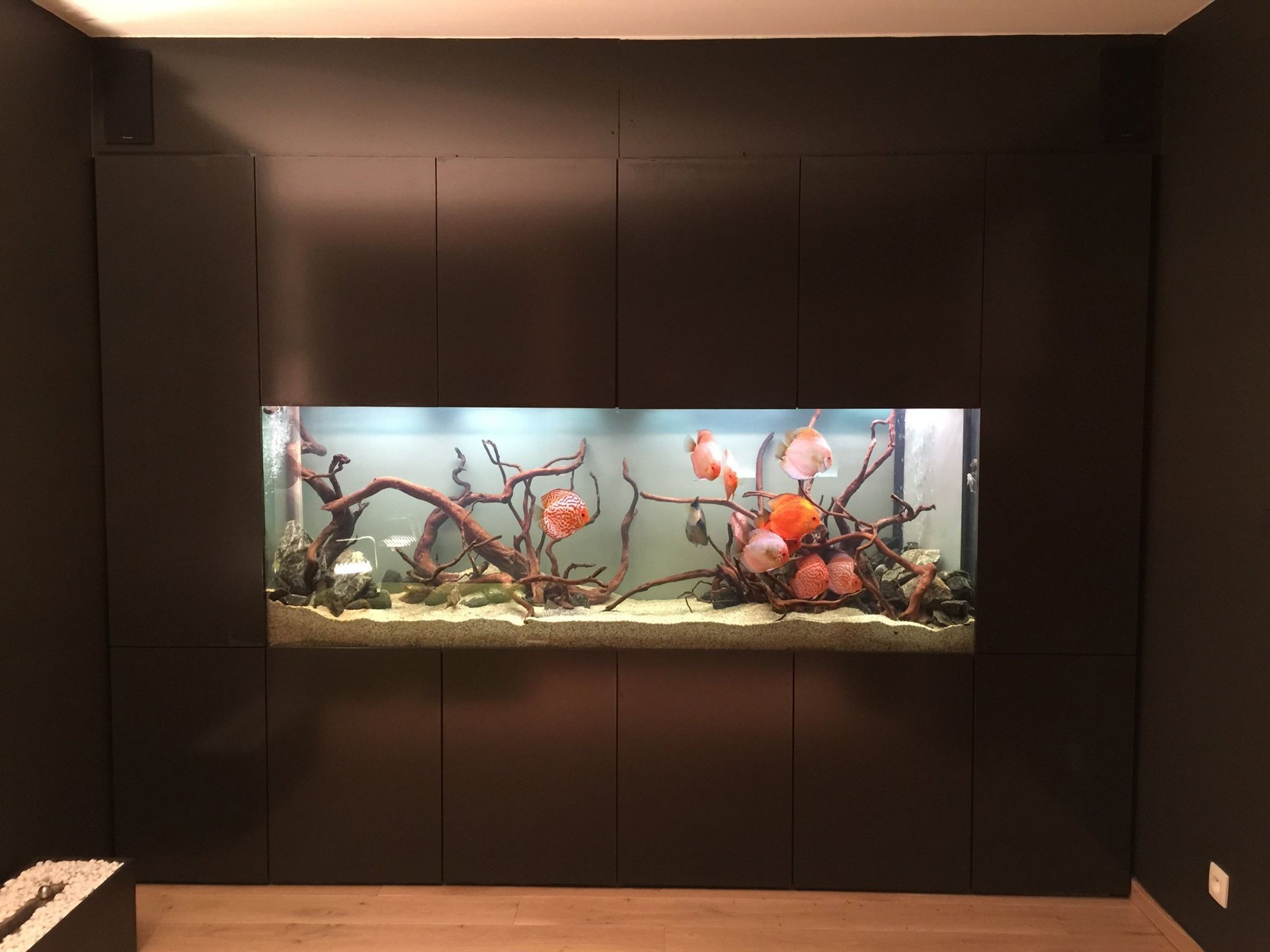 Design Aquarium Kast : Kast rond aquarium google zoeken wandkast pinterest aquariums