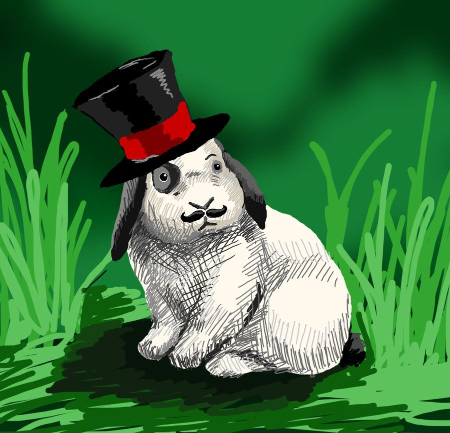 fancy rabbit - Buscar con Google