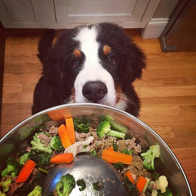 repost via whaler_the_bernese Time to absolutely crush my
