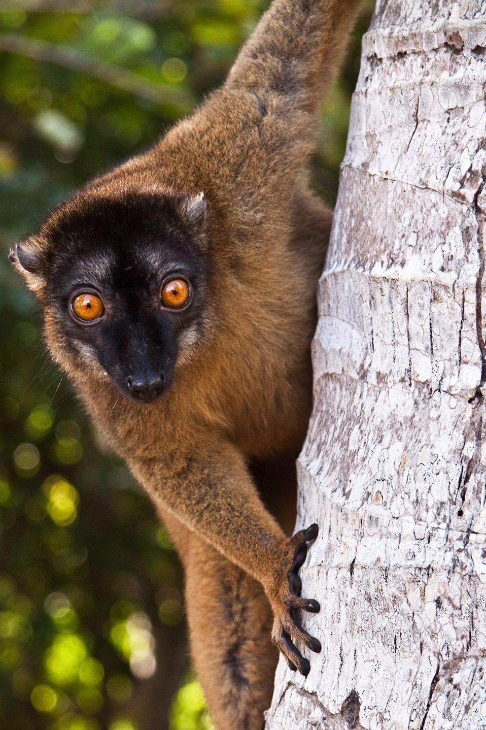 Epingle Par Mimosa Sur God S Amazing Creatures Animal Domestique Animaux Sauvages Lemurien