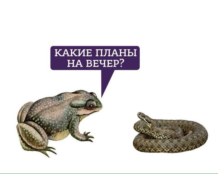 Картинки по запросу ебала жаба гадюку
