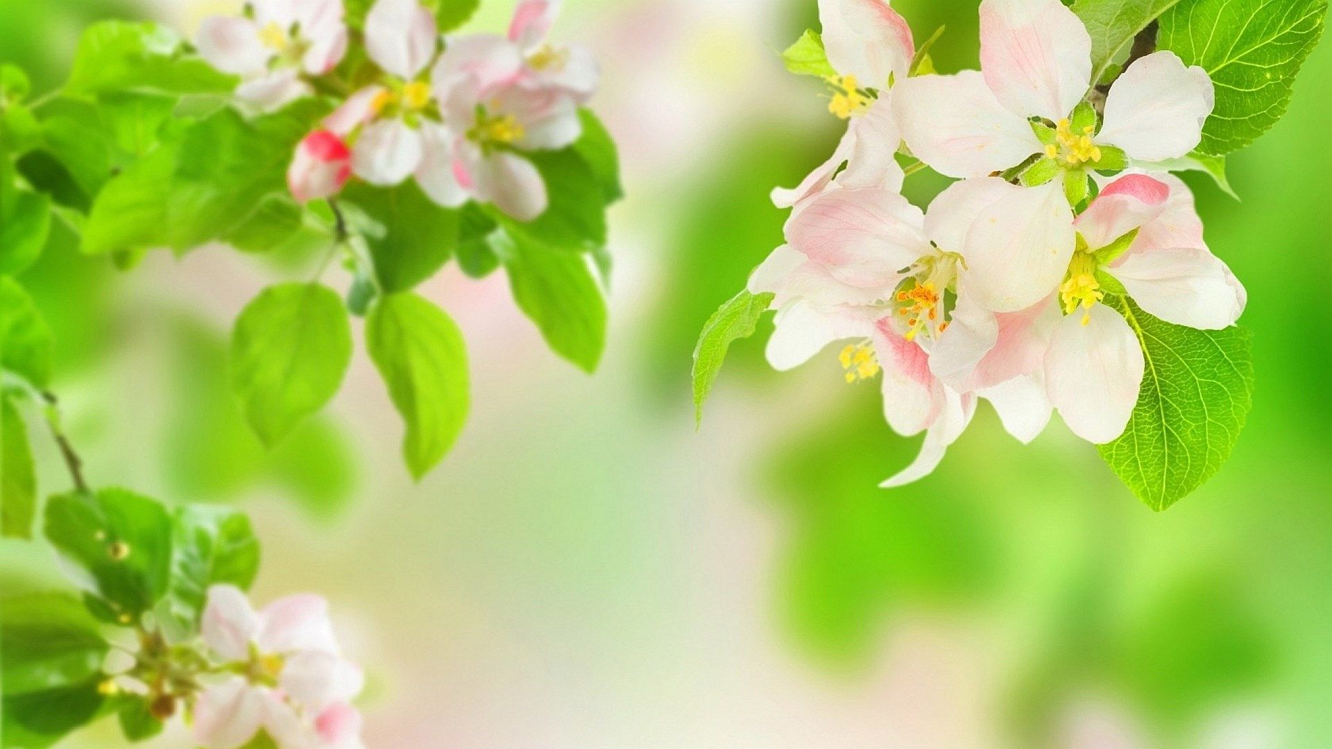 Spring High Resolution Wallpapers Widescreen Spring Flowers Wallpaper Flower Wallpaper Spring Flowers Background