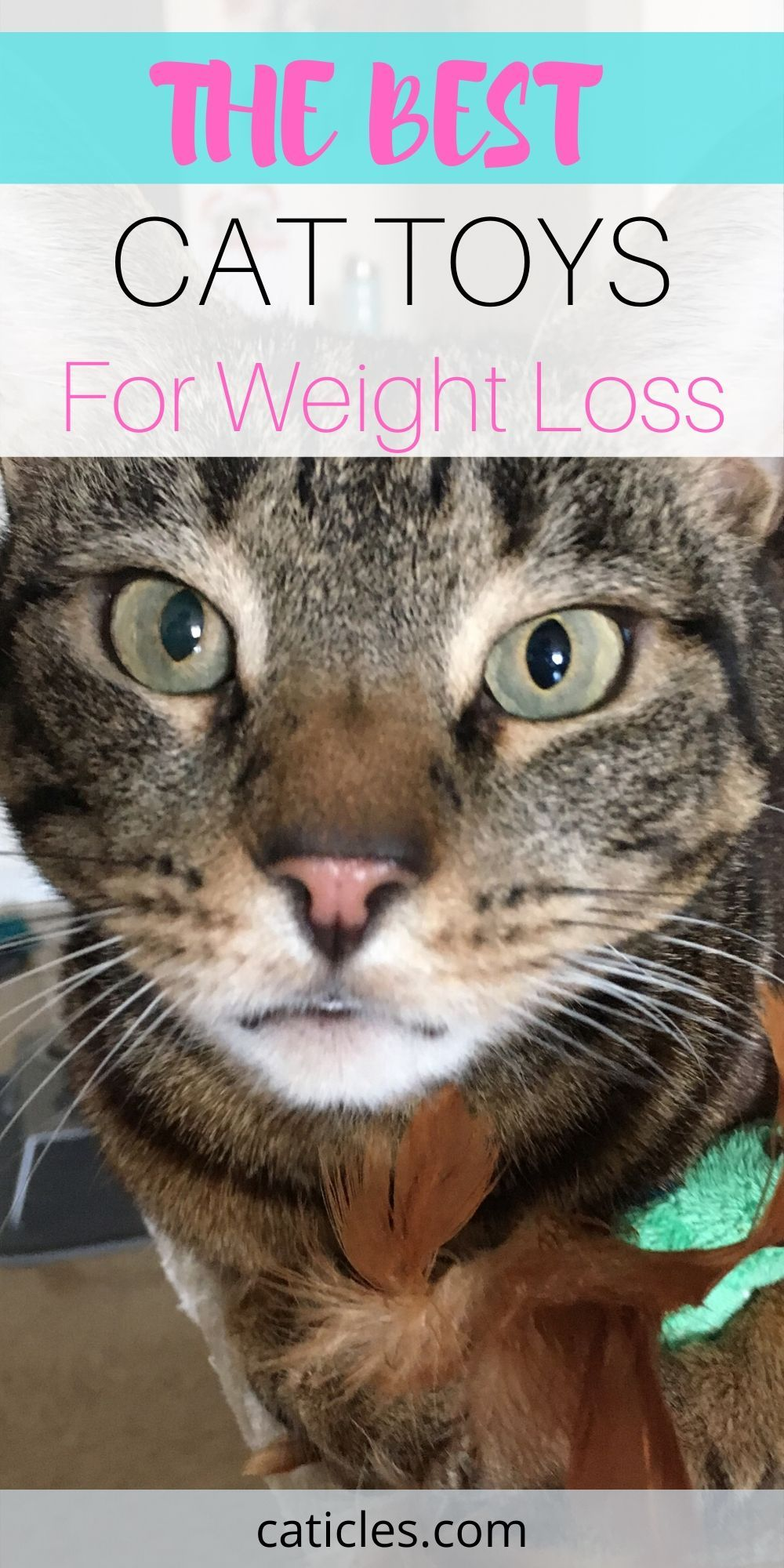 b82aa67544b56c9ad0b3353ecb0e0b37 - How To Get My House Cat To Lose Weight