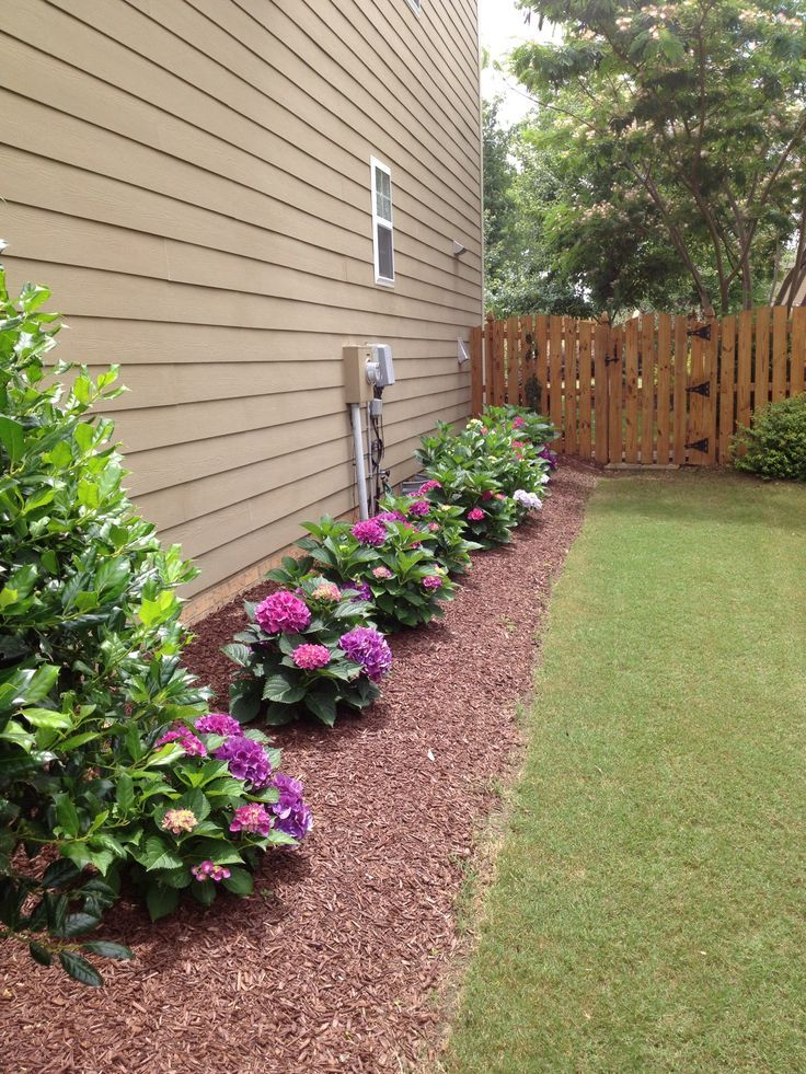 Landscaping idea for the side of the house   Greenville, NC   Pinterest    Landscaping ideas, Hydrangea and House - Landscaping Idea For The Side Of The House Greenville, NC