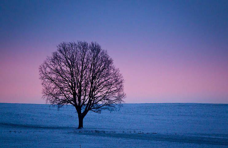 Las Imágenes Invernales Más Espectaculares, En Fotos A