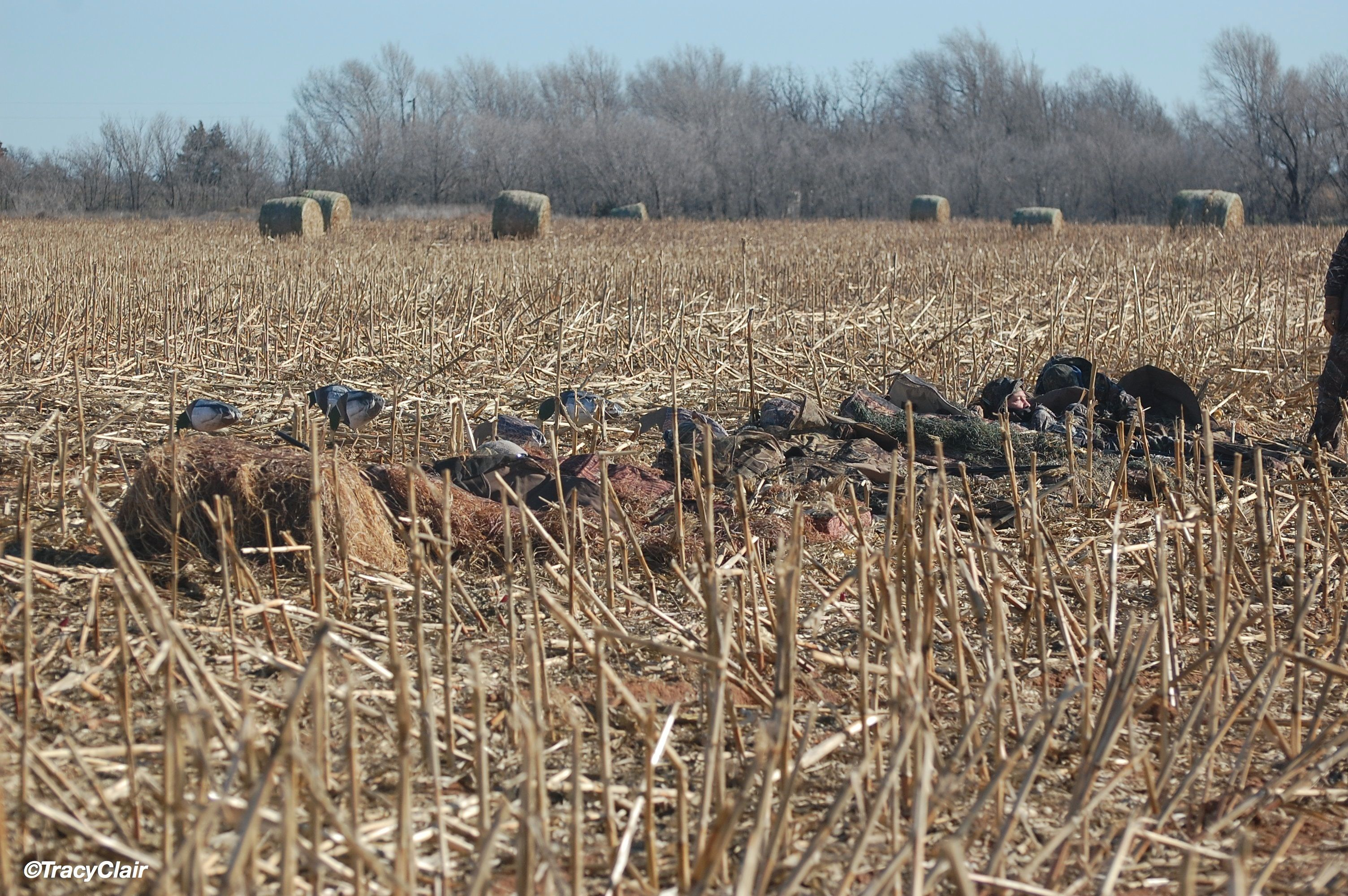 Can you see them? That\'s the object. Avian X A Frame Blind | Duck ...