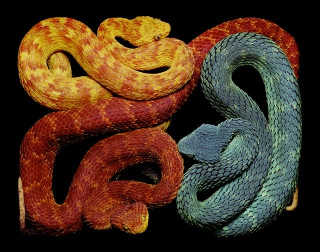 Showing the beauty of snakes