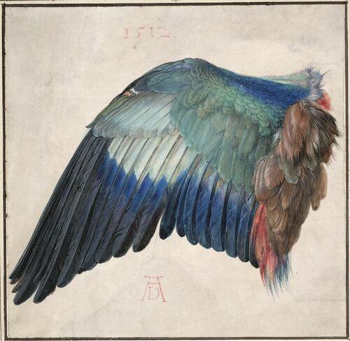 Albrecht Dürer, Blaurackenflügel - Wing of a Blue Roller, um 1500 (oder 1512) © Albertina, Wien