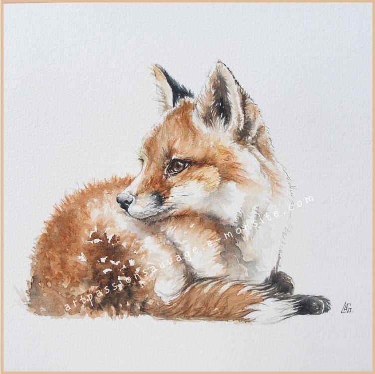 Renard Aquarelle Peinture Renard Illustrations Animalieres