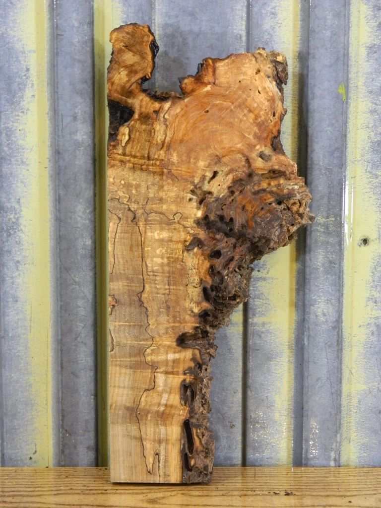 Very Rustic Maple Burl Bookend/Live Edge Wall Art/Accent Slab