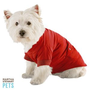 This Is Adorable And Would Suit My Ig Quite Nicely Martha Stewart Pets Pets Dog Coats