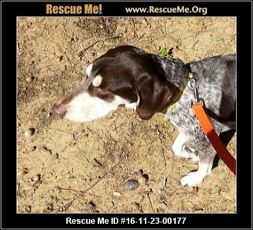 North Carolina German Shorthaired Pointer Rescue Adoptions