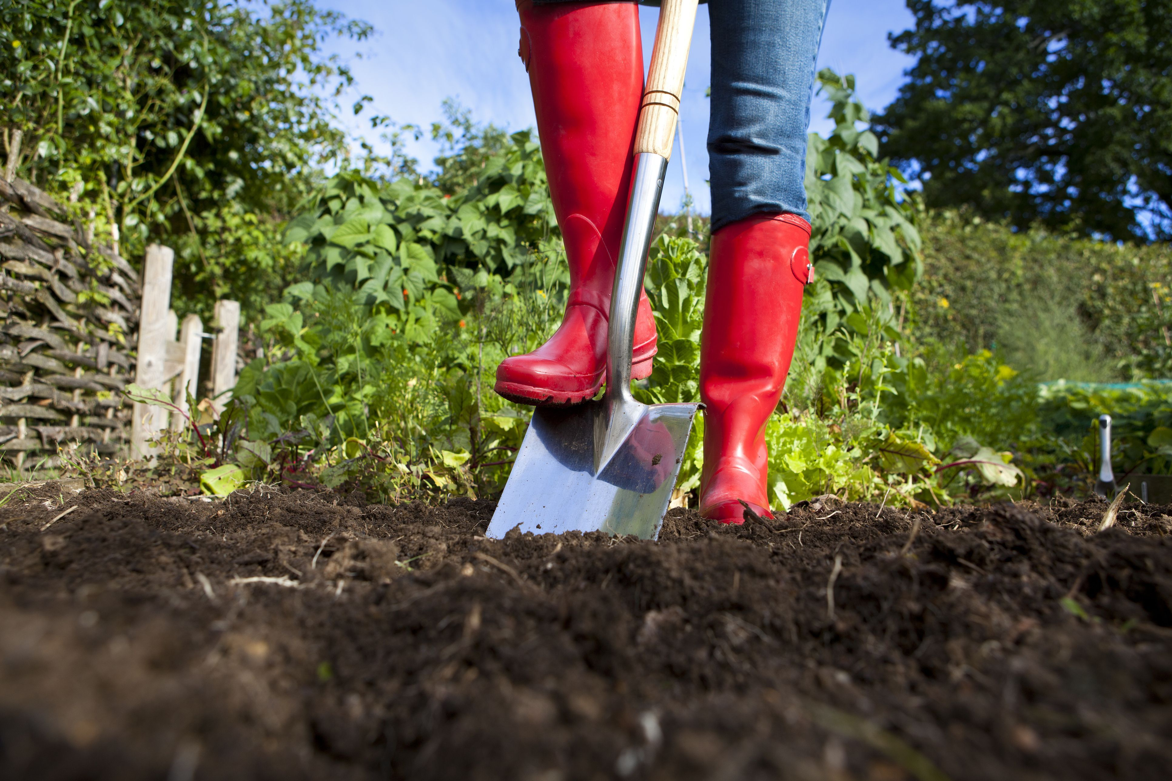 b82fe5c76d61e656c6fbcae23dcebc87 - Is Composted Manure Safe For Vegetable Gardens