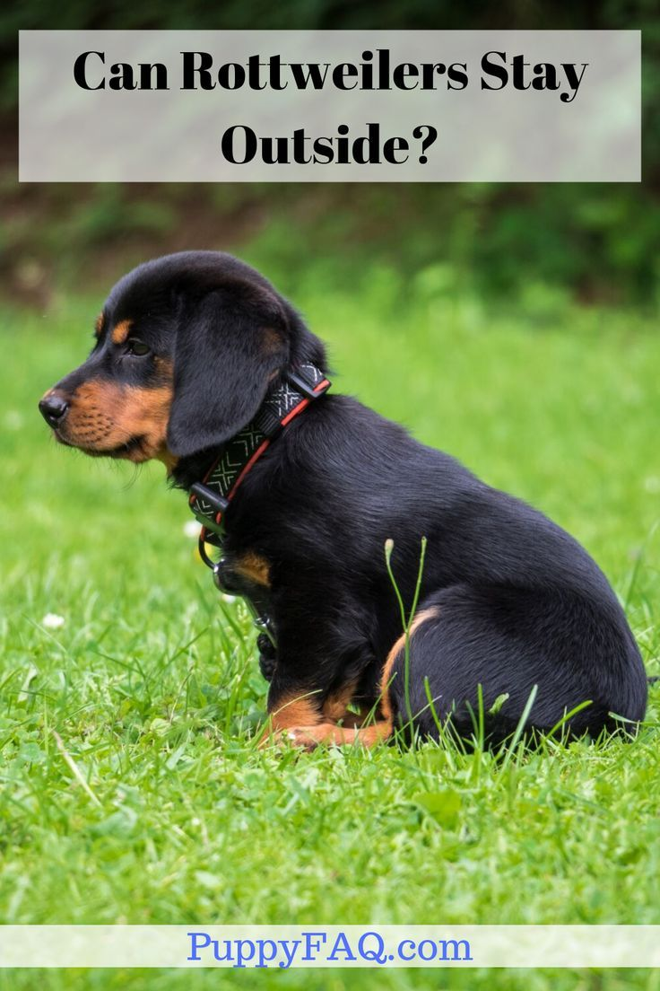 Can rottweilers stay outside rottweiler puppies